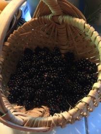 more blackberries